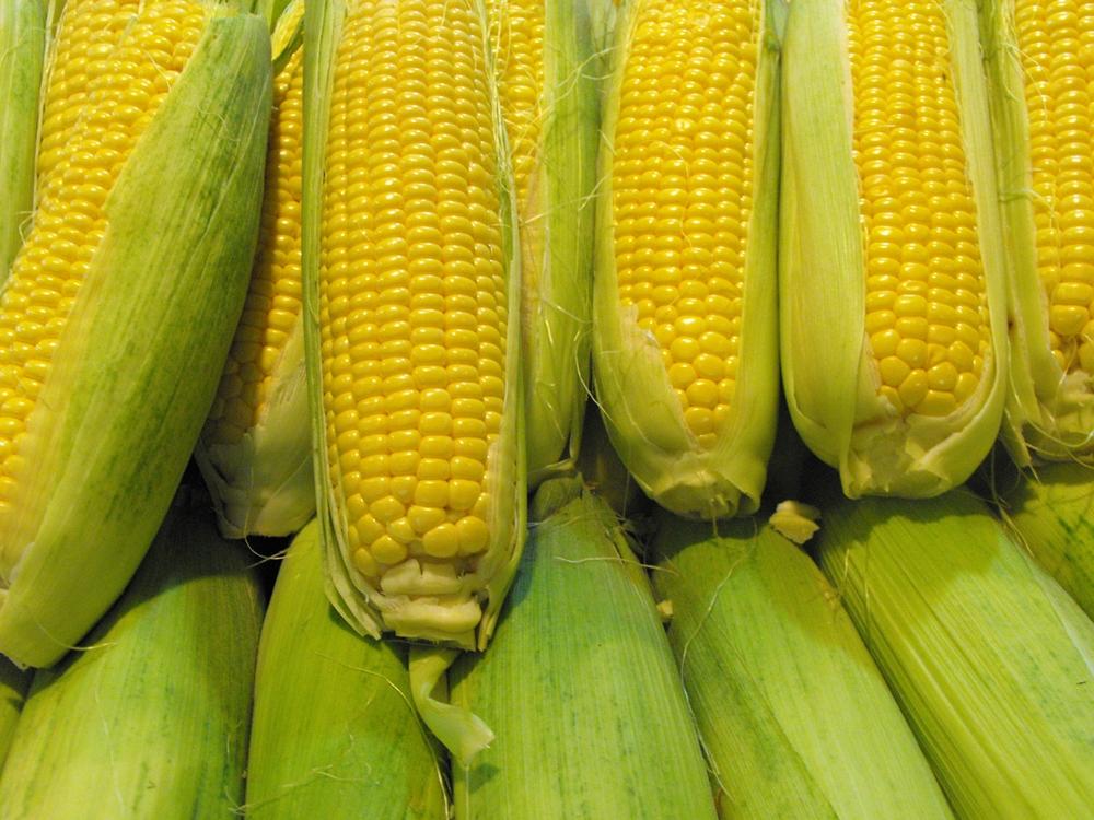 Im Streit um genveränderte Lebens- und Futtermittel hat das EU-Parlament den Vorschlag für nationale Importverbote abgelehnt.