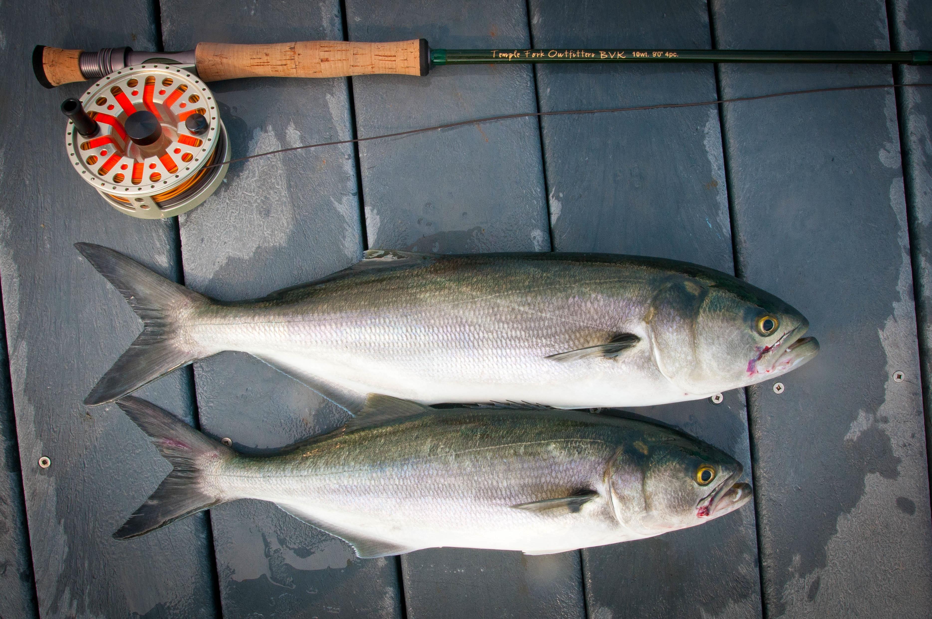 Die neuen Fangquoten für Fisch der EU rufen Kritik von Umweltschutzorganisationen hervor.
