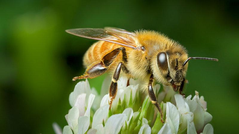 Einsatz von drei Insektiziden bleibt beschränkt