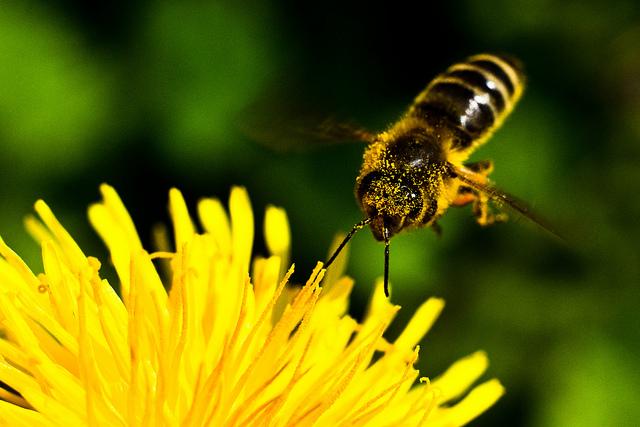 EU Europa Nachrichten Bienensterben