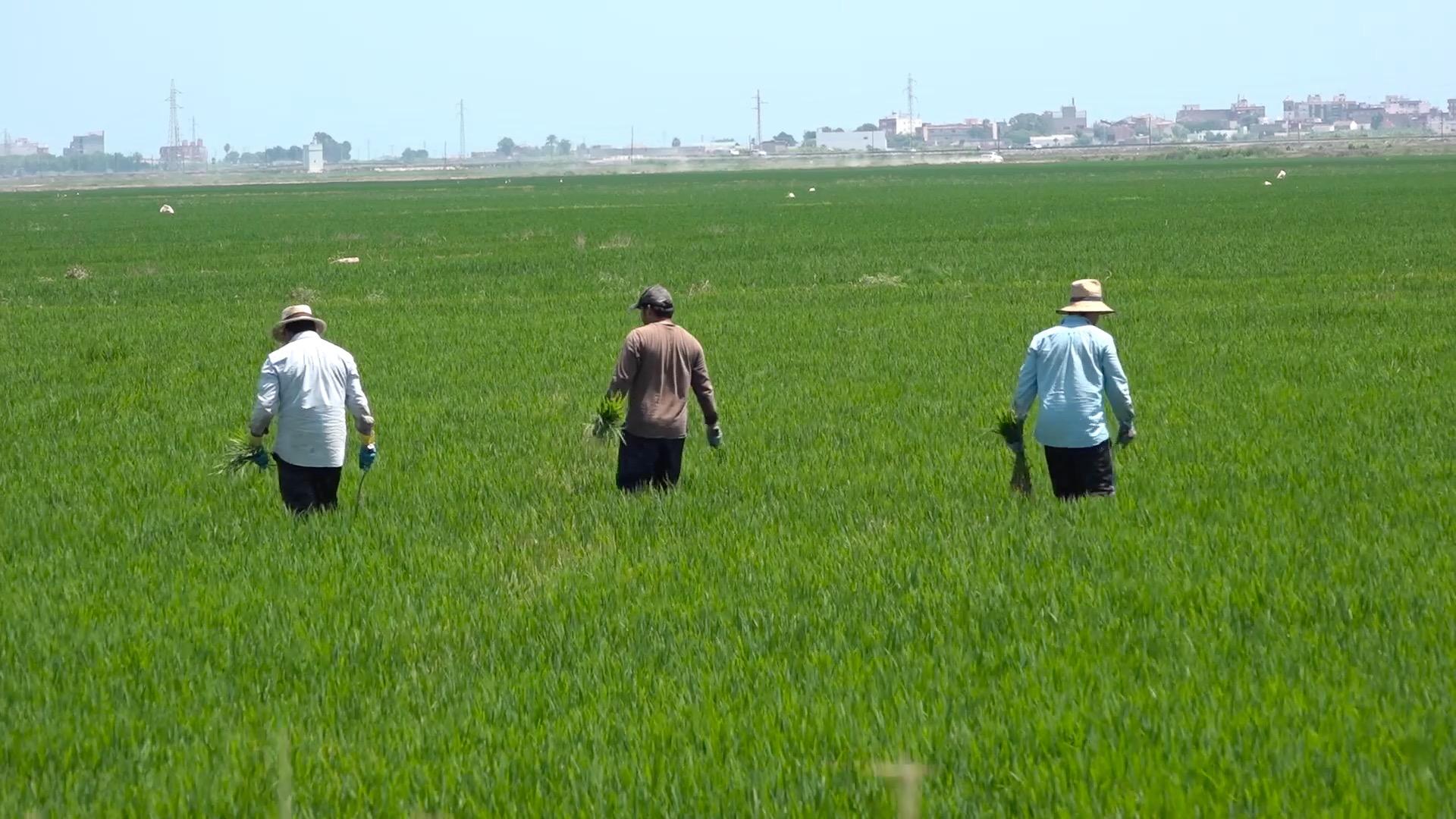 Das Engagement der EU für landwirtschaftliche Innovationen ist auch für den Verbraucher von Vorteil.