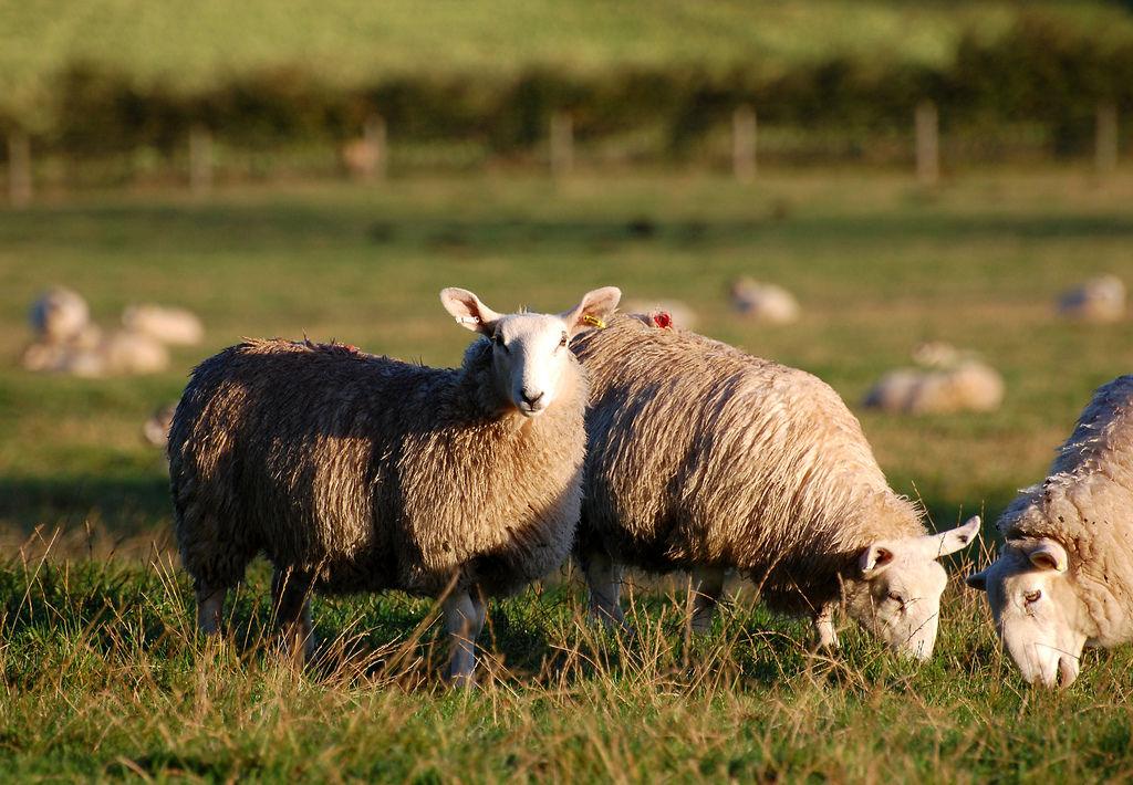 Landwirtschaft England