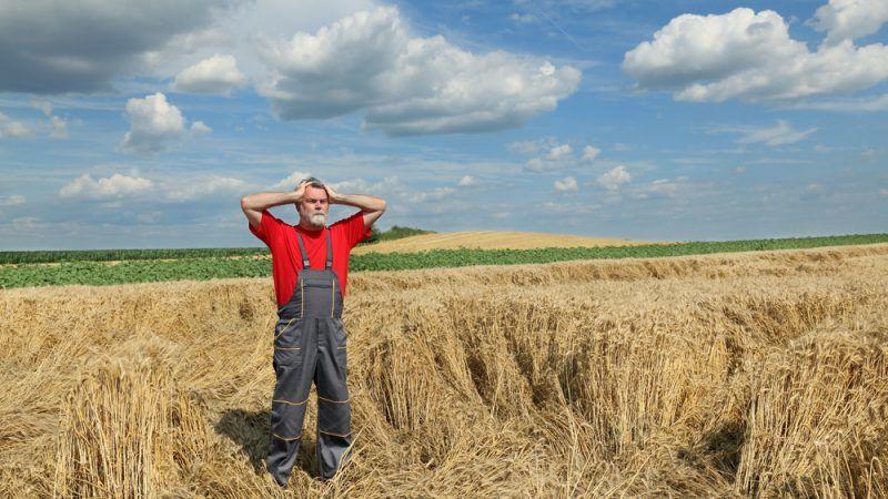 Studie Alle Zwei Tage Begeht Ein Französischer Bauer Selbstmord